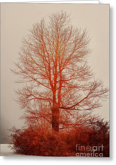 On Fire In The Fog Greeting Card