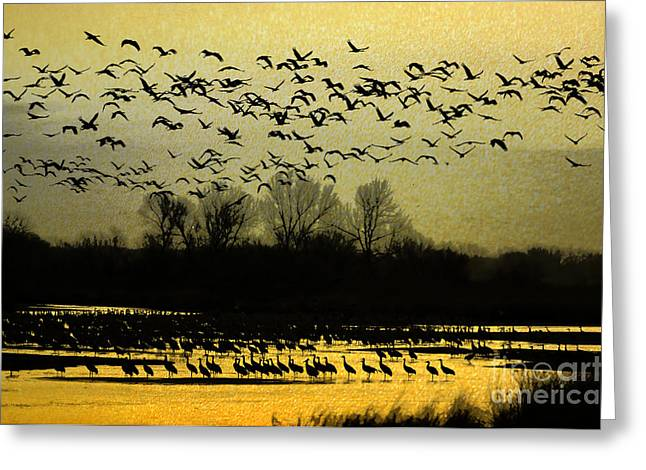 On Golden Pond Greeting Card by Elizabeth Winter