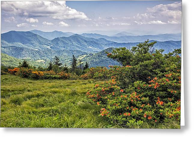 On Roan Mountain 10 Greeting Card