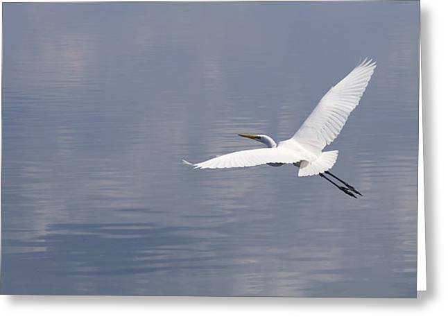 On Swift Wings Greeting Card