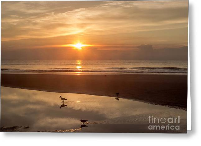 On The Beach At Sunrise Greeting Card by Zina Stromberg