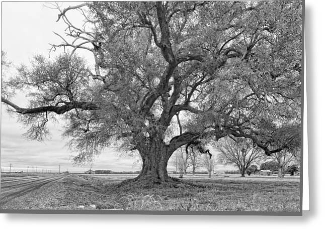 On The Delta Monochrome Greeting Card