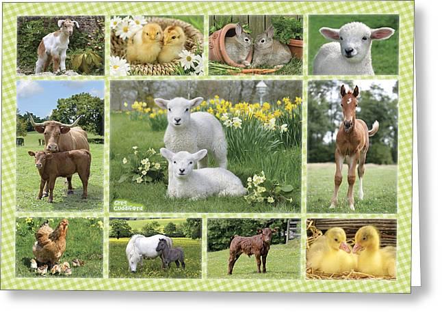 On The Farm Multipic Greeting Card by Greg Cuddiford