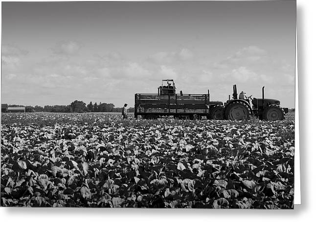 Greeting Card featuring the photograph On The Farm by Ricky L Jones