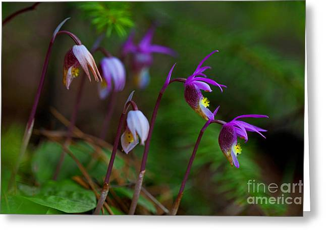 On The Forest Floor Greeting Card by Barbara Schultheis