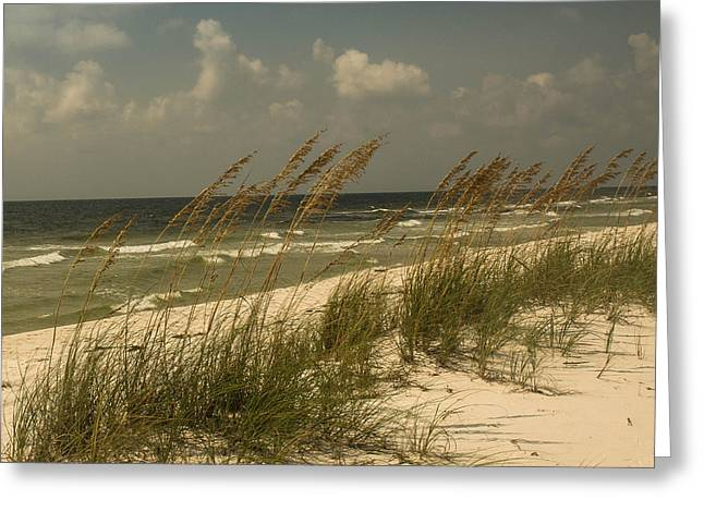 On The Gulf Greeting Card by Maria Suhr