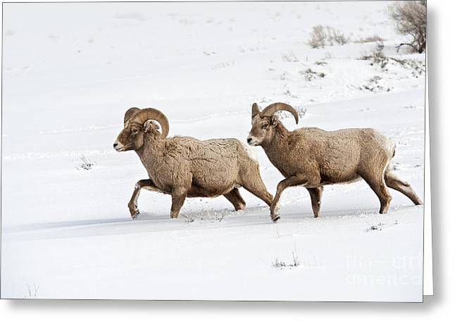 On The Move Greeting Card by Sandra Bronstein
