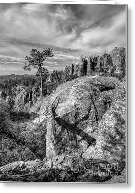 On The Needles Highway 2 Bw Greeting Card