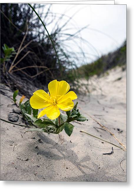 Greeting Card featuring the photograph On The Path by Sennie Pierson