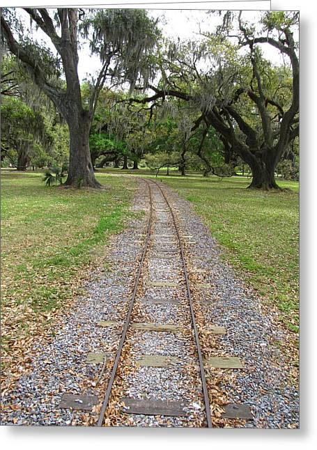 Greeting Card featuring the photograph On The Right Track by Beth Vincent