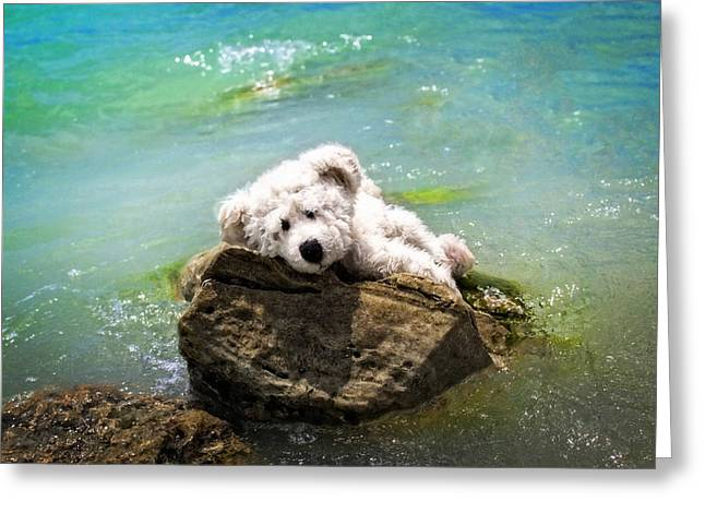 On The Rocks - Teddy Bear Art By William Patrick And Sharon Cummings Greeting Card by Sharon Cummings