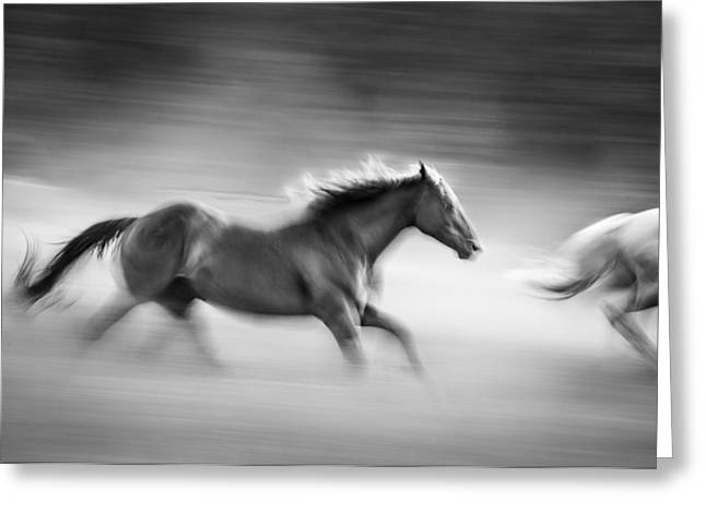 On The Run Greeting Card by Dianne Arrigoni