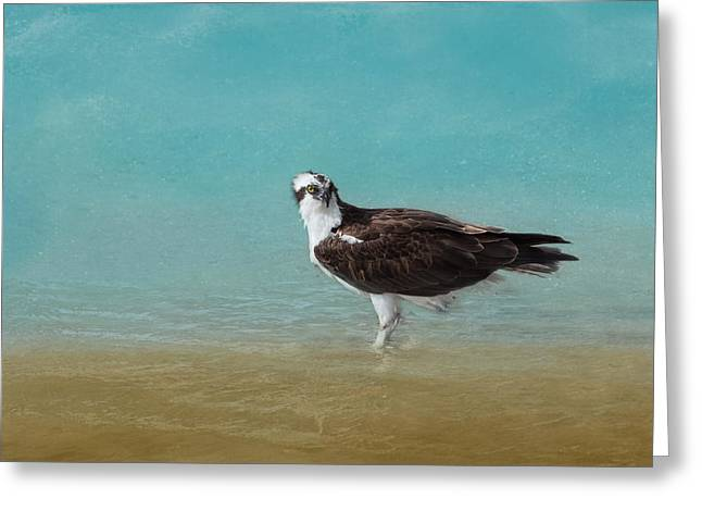On The Shore - Osprey Greeting Card