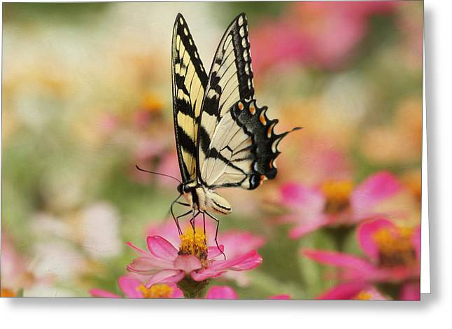 On The Top - Swallowtail Butterfly Greeting Card by Kim Hojnacki