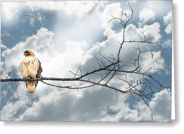 On A Wing Greeting Card by Diana Angstadt