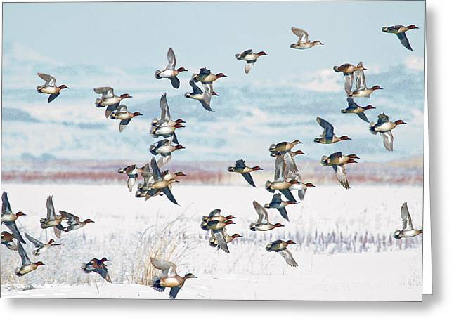 On The Wing Greeting Card by TL  Mair