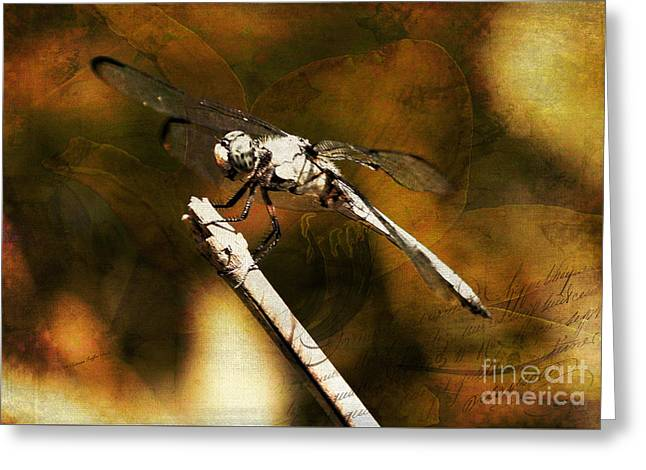 On The Wings Of Dragonflies Greeting Card