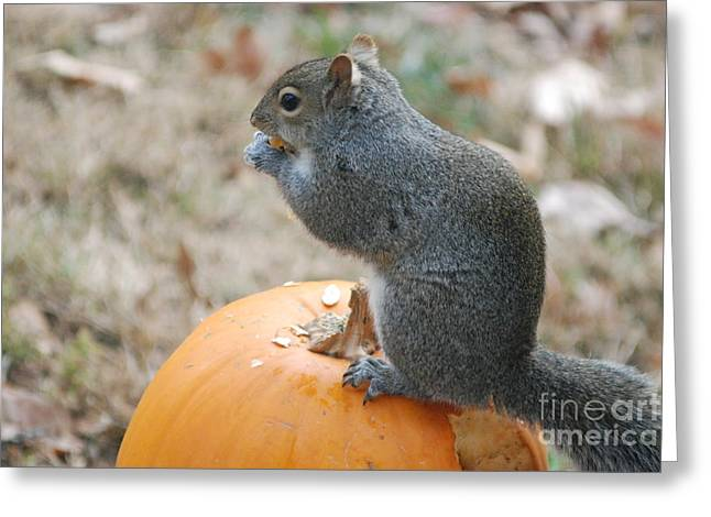 Greeting Card featuring the photograph On Top Of The Pumpkin by Mark McReynolds