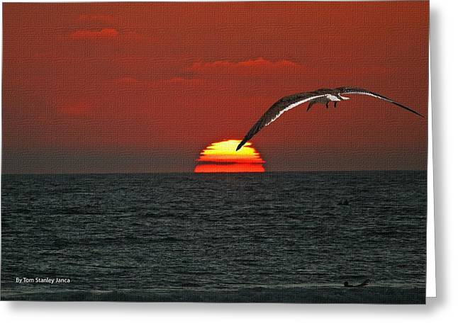 Greeting Card featuring the photograph One Black Skimmers At Sunset by Tom Janca