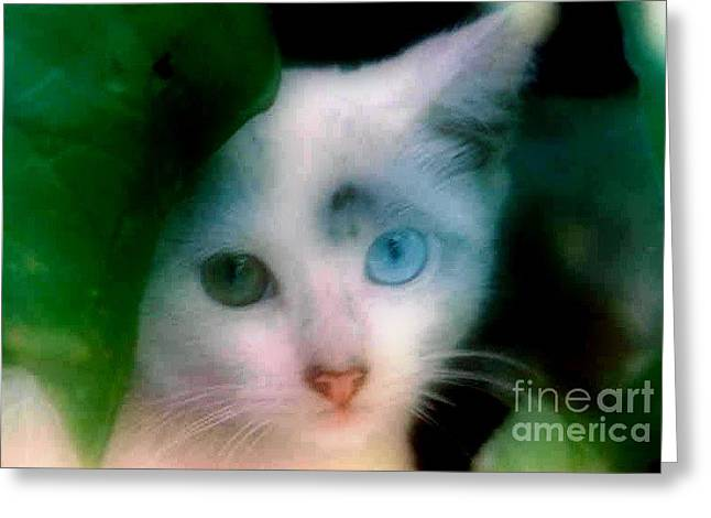 One Blue One Green Cat In New Olreans Greeting Card