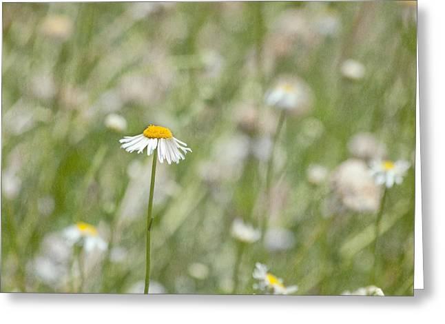 One - Daisy Flower Greeting Card