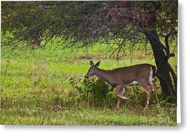 One Deers Dinner Greeting Card by Bill Woodstock