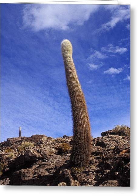 Greeting Card featuring the photograph One Enormous Cactus by Lana Enderle