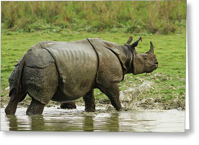 One-horned Rhinoceros, Coming Greeting Card
