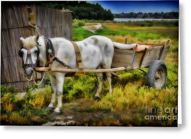 One Horse Wagon Greeting Card