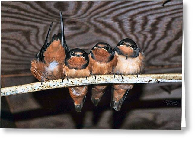 One In Every Crowd Greeting Card by Fran J Scott
