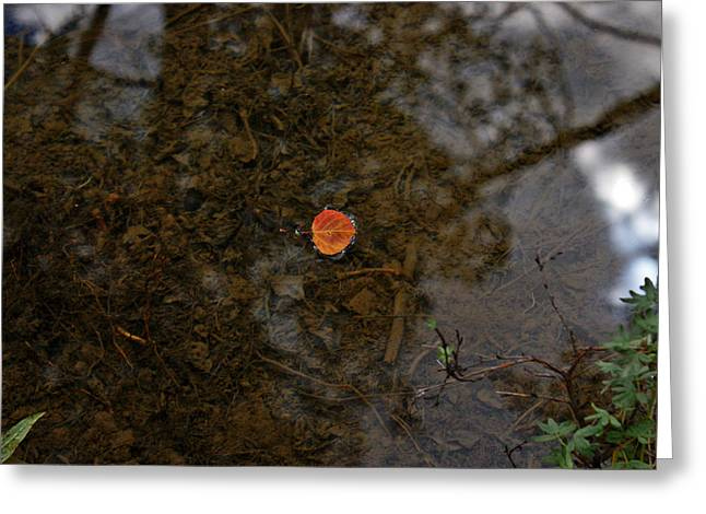 Greeting Card featuring the photograph One Leaf by Jeremy Rhoades