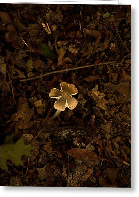 Greeting Card featuring the photograph One Little Mushroom by Lena Wilhite