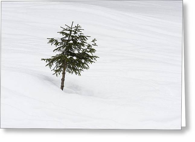 One Little Tree In The Snow In Winter Greeting Card by Matthias Hauser