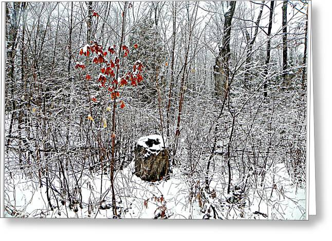 One Lone Log Greeting Card by Dianne  Lacourciere