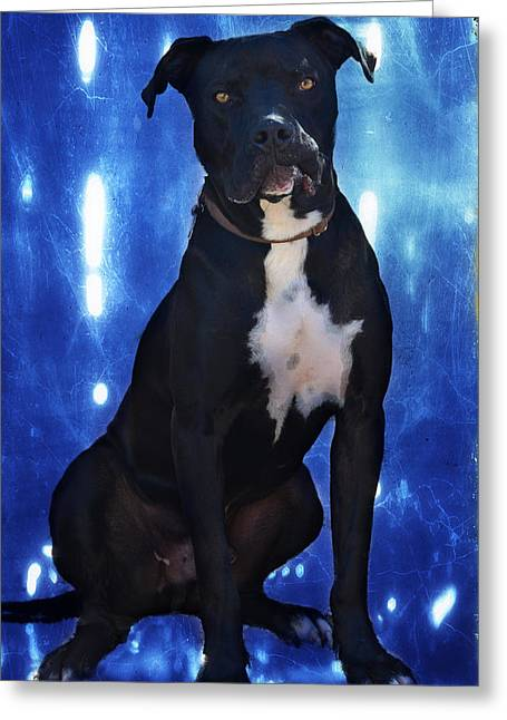 One Lucky Dog Greeting Card by Barbara Manis