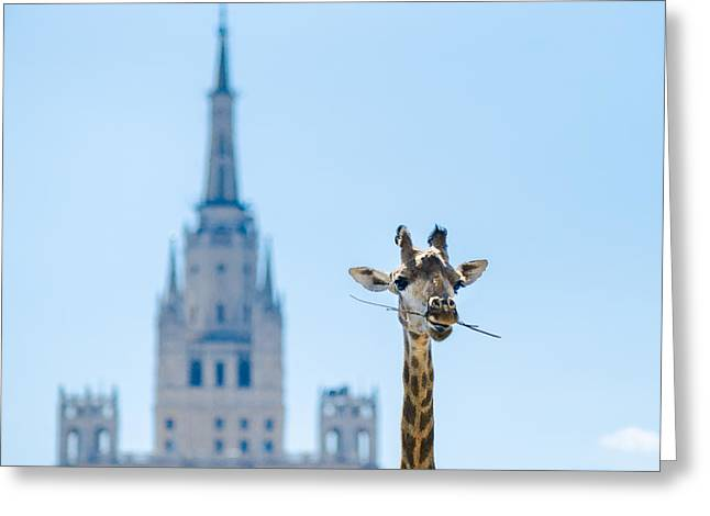 One More Bite To Outgrow The Tallest 2 Greeting Card by Alexander Senin