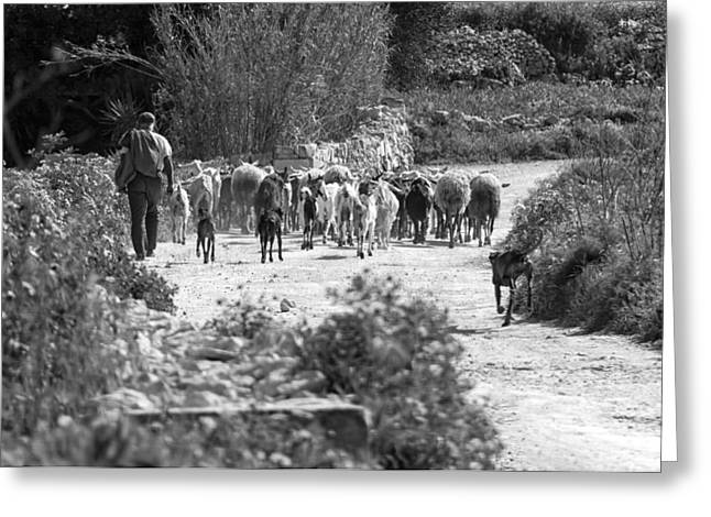 One Of The Last Gozitan Traditional Sheep Farmers  Greeting Card by Focus  Fotos