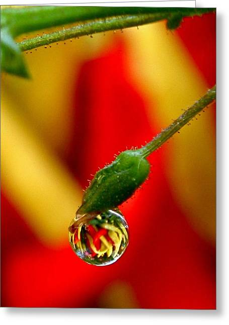 One Raindrop Greeting Card by Rona Black