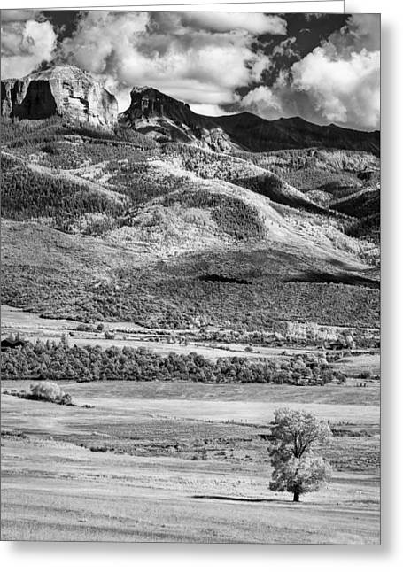 One Stands Alone Greeting Card by Jon Glaser