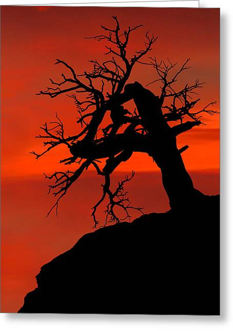 One Tree Hill Silhouette Greeting Card
