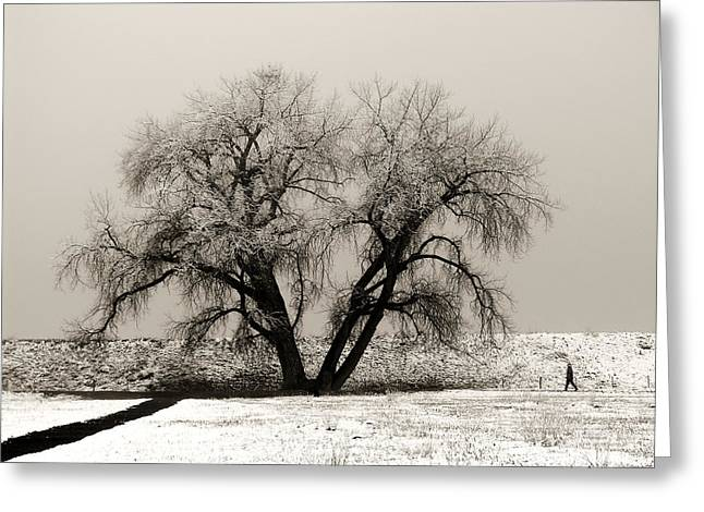 One Tree One Man Greeting Card by Marilyn Hunt