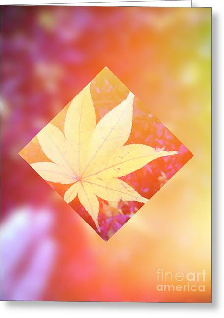 One Yellow Maple Leaf 2 Greeting Card