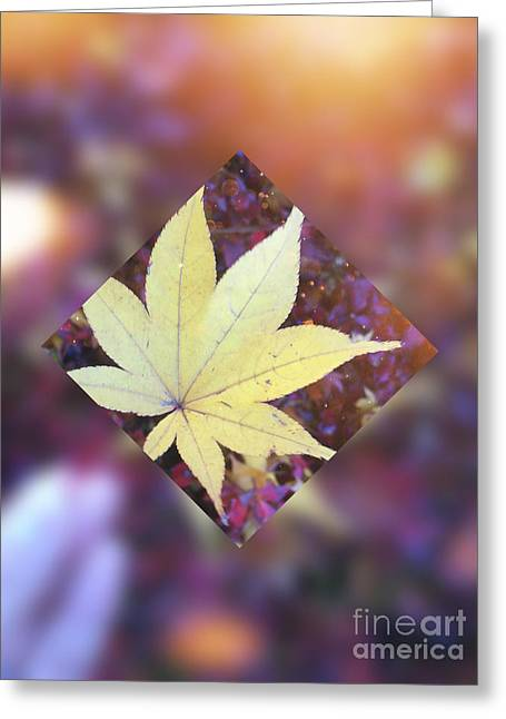 One Yellow Maple Leaf Greeting Card by Beverly Claire Kaiya