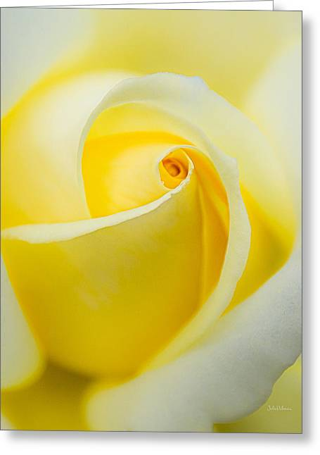 One Yellow Rose Greeting Card by Julie Palencia
