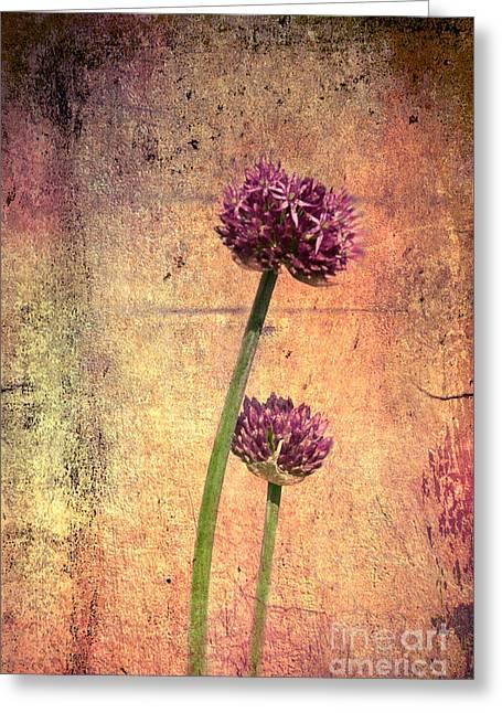 Onion Greeting Card by Lali Kacharava
