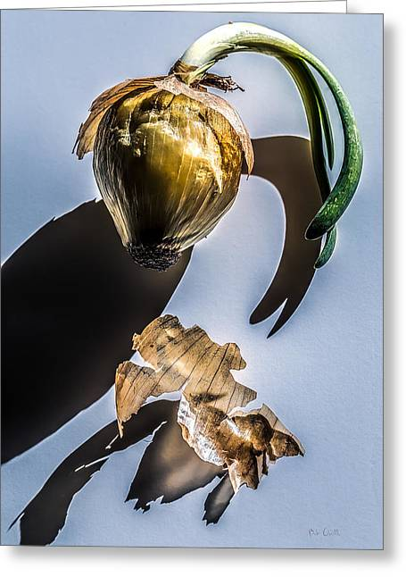 Onion Skin And Shadow Greeting Card by Bob Orsillo