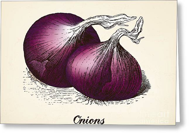 Onions Vintage Illustration, Red Onions Greeting Card