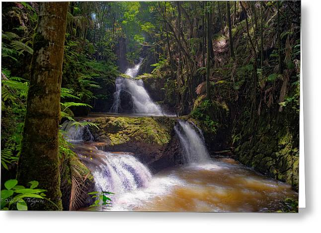Greeting Card featuring the photograph Onomea Falls by Jim Thompson