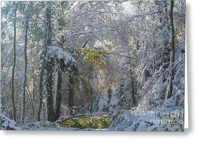 Onset Of Winter 1 Greeting Card by Rudi Prott