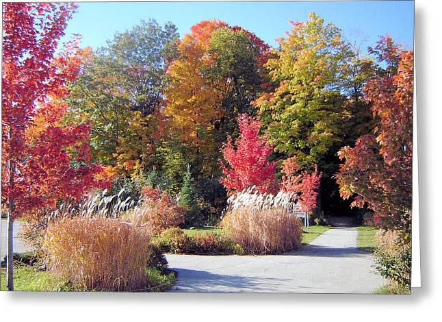 Ontario In The Fall Greeting Card by Gaetano Salerno